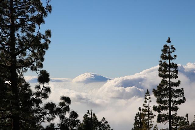 Banco de nubes o panza burro en Tenerife